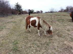 past wild ponies,