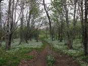 through virgin forest,