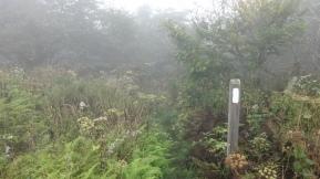 through dense meadows,